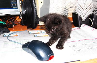 Pelių gaudymo pamokos XXI a. (atsuntė Kęstas Kaminskas)