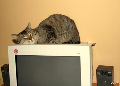 Katinas, vardu Kareivis, labai myli techniką ir dažniausiai laiką leidžia miegodamas prie kompiuterio (aut. Inga Savickienė)