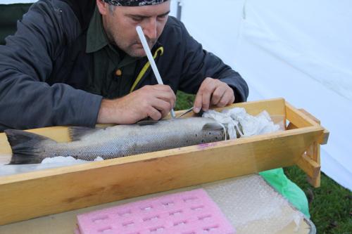 Lietuvoje žuvys bus sekamos akustine įranga