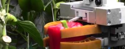 Paprikas skinantis robotas