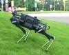 Šunys-robotai jau labai greitai gali tapti tokie pat populiarūs kaip išmanieji telefonai