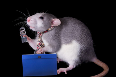Mokslininkai įrodė, kad mobilieji telefonai nekenkia sveikatai