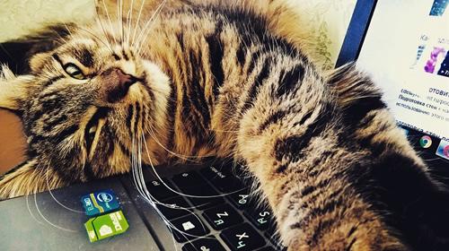 Nerimą visame pasaulyje sukėlęs dokumentas: ar sutiktumėte mokėti už kiekvieną kačiuko nuotrauką?