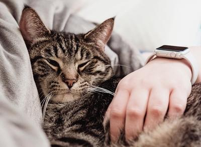 """Kaip stebėti miego kokybę naudojant """"Apple Watch"""""""