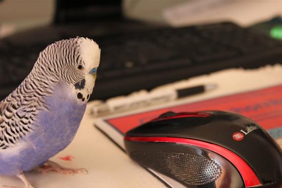 Gyvūnams padedančios technologijos: nuo išmanaus antkaklio iki virtualios tvoros