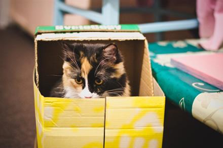 Jeigu katinas būtų dėžėje su nestabiliais sprogmenimis, neatidarę dėžės nežinotume, ar jis gyvas, ar ne