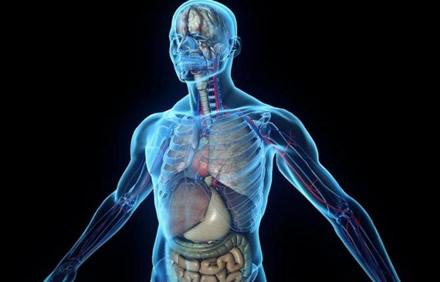 Medikai išmoko matyti žmones kiaurai be rentgeno spindulių ir endoskopinių kamerų
