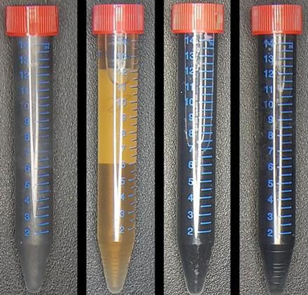 Iš kairės į dešinę: grafitas, grafeno oksidas ir Shewanella bakterijos, šių bakterijų pagamintas grafenas, chemiškai pagamintas grafenas © Rochester'io universitetas