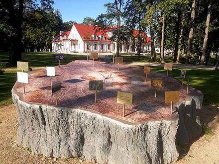 Stelmužės ąžuolo kamieno skulptūra / Pranešimo autorių nuotr.