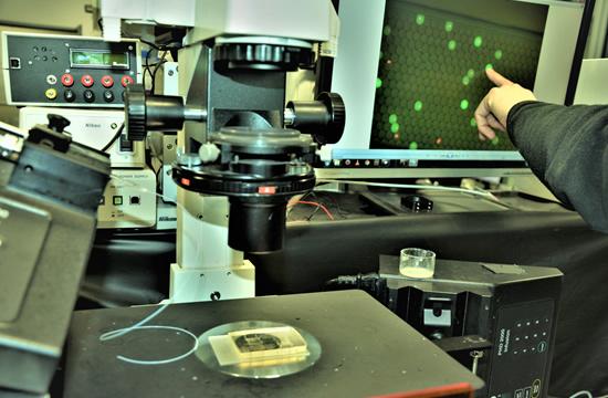 Gyvybės mokslų sektoriui augti – žalia šviesa