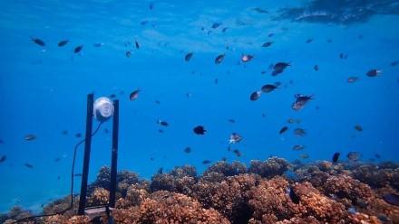 Garsiakalbiai koraliniame rife / Ekseterio universiteto nuotr.