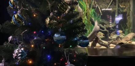 Elektrinis ungurys ir Kalėdų eglutė / Stopkadras