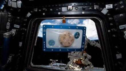 Kosmose iškepti sausainiai / NASA nuotr.