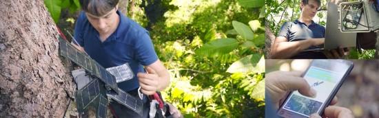 Išmanioji aplinkosauga: kaip seni telefonai ir dirbtinis intelektas gali išgelbėti miškus?