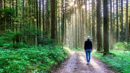 Iniciatyva taršai mažinti: ragina vaikščioti ir auginti virtualius medžius