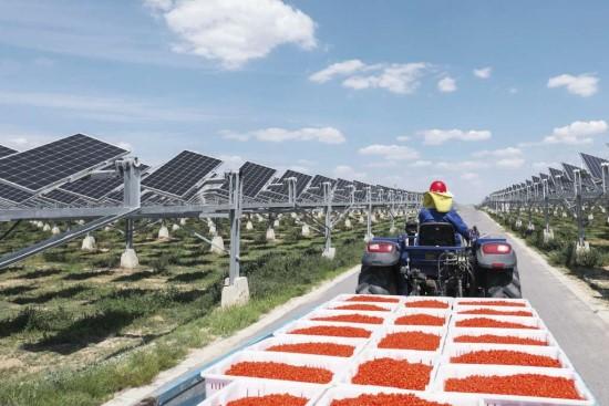 """""""Huawei"""" dykumoje įrengė saulės energijos elektrinę, kuri turės ir kitą funkciją"""