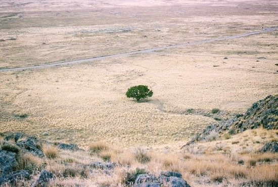 Giliojo mokymosi programa: nederlingose dykumose iš tikrųjų yra milijonai medžių