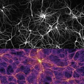 Neuronai ir visata ©  Else If Then (CC BY-SA 4.0) | commons.wikimedia.org