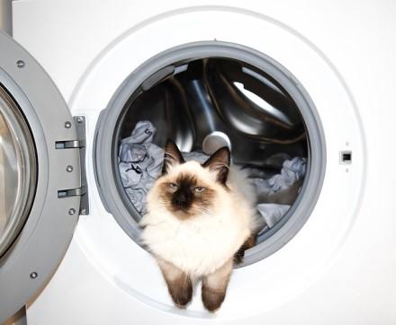 Palikti per naktį ar nerizikuoti: skalbyklių ir indaplovių dilema ne tokia ir paprasta