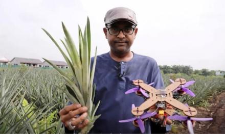 Proveržis dronų rinkoje: bus gaminami iš ananasų ir taps visapusiškai pranašesni