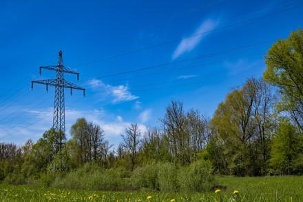Lietuvoje pakeista tvarka, kokie medžiai bus laikomi pavojingi elektros linijoms
