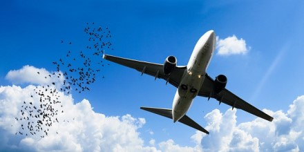 Briuselio oro uostas kovoja su sena problema – virš takų dabar dainuos dronai